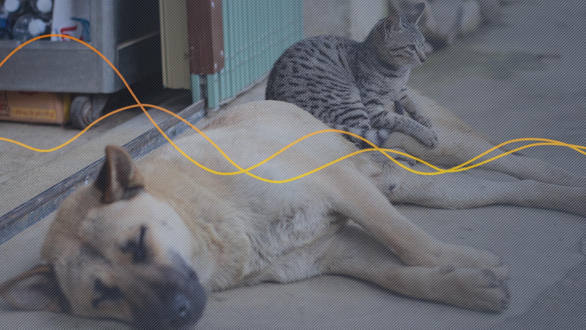 Por que investir no mercado de Pets?