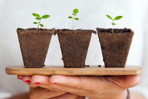 Importância da sustentabilidade